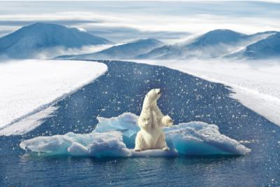 reduce el cambio climatico con placas solares y energia renovable